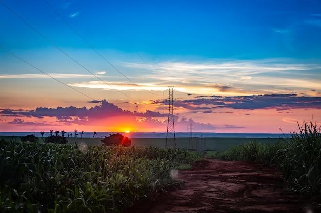 Campo de cana-de-açúcar com transmissão de linha elétrica