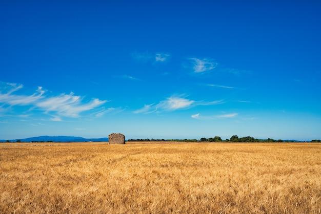 Campo de cereais de propriedade de terreno com céu azul e uma casa no horizonte.
