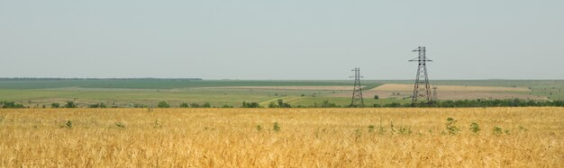 Campo de cevada. agricultura e pecuária. primeira colheita de verão