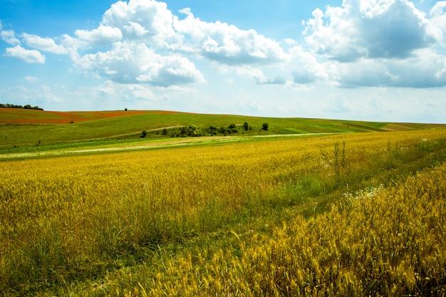 Campo de colheita em um dia ensolarado