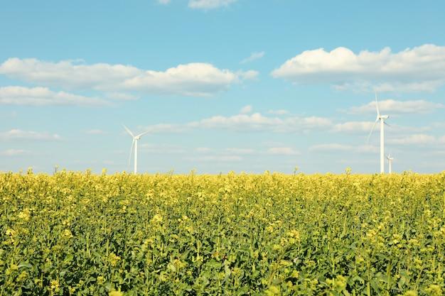 Campo de colza bonito com moinhos de vento contra o céu azul