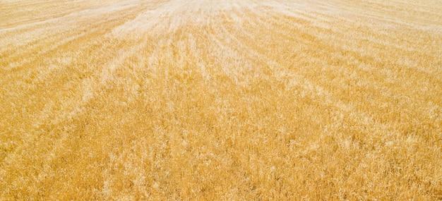 Campo de culturas mistas (forragem para gado), panorama aéreo, padrão natural