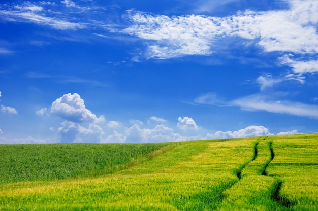 Campo de exploração agrícola com um céu com nuvens