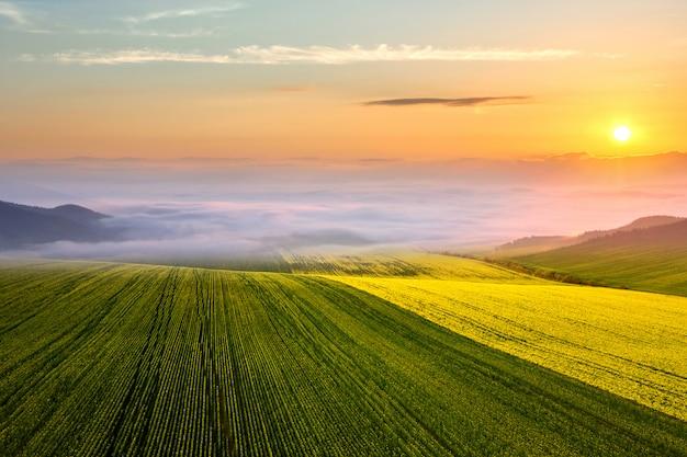 Campo de exploração agrícola verde-claro com crescimento de plantas de colza e montanhas nevoentas distantes ao pôr do sol.