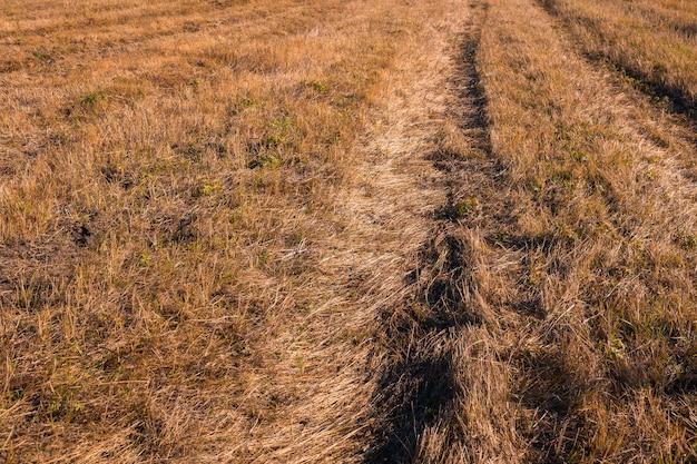 Campo de feno colhido no outono