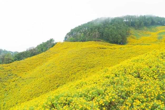 Campo de flor amarela