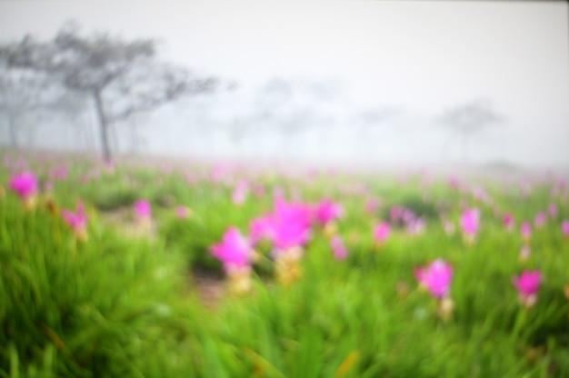 Campo de flor turva abstrata na natureza com árvores