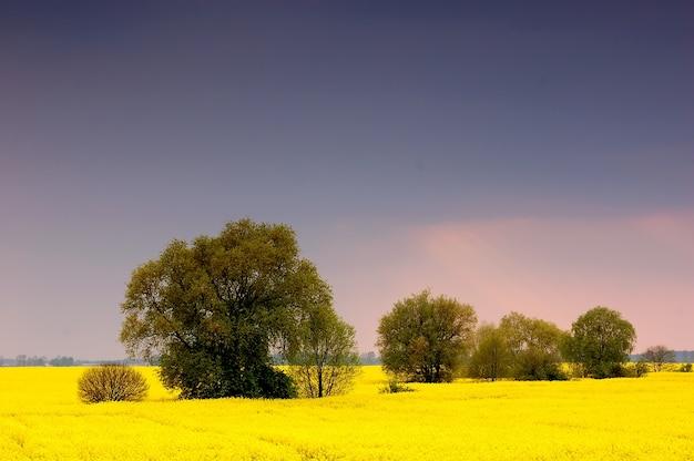 Campo de flores amarelas com árvores