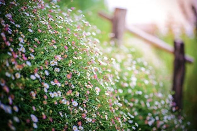 Campo de flores da primavera no sol