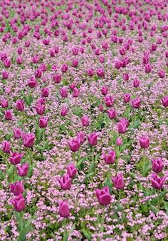 Campo de flores da primavera para o fundo