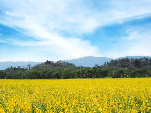 Campo de flores para a primavera ou o verão