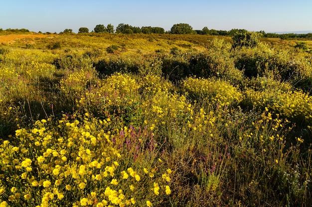 Campo de flores silvestres coloridas e plantas verdes ao nascer do sol. riaza
