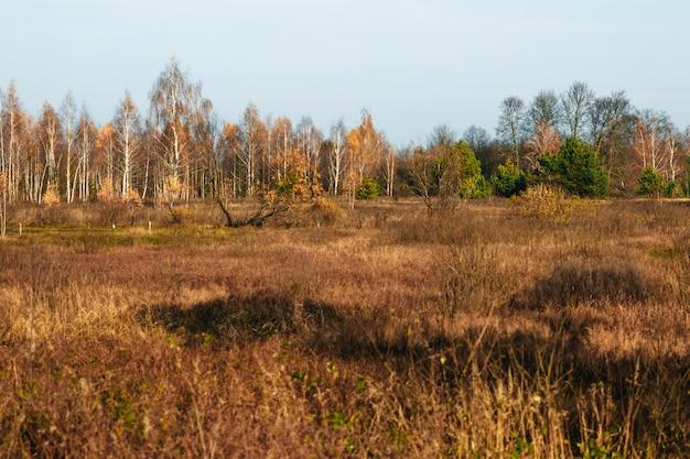 Campo de grama amarela na frente da floresta de outono.
