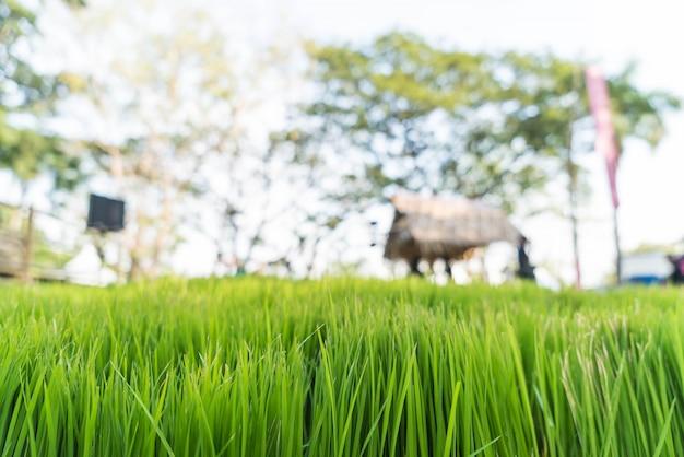 Campo de grama com borrão pessoas fundo