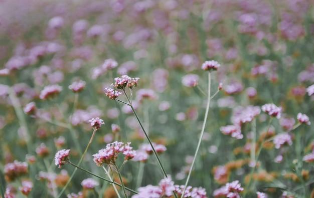 Campo de grama de flor roxa na natureza prado botânica