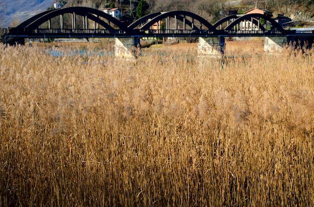 Campo de grama de pampa e uma ponte em piemonte, itália