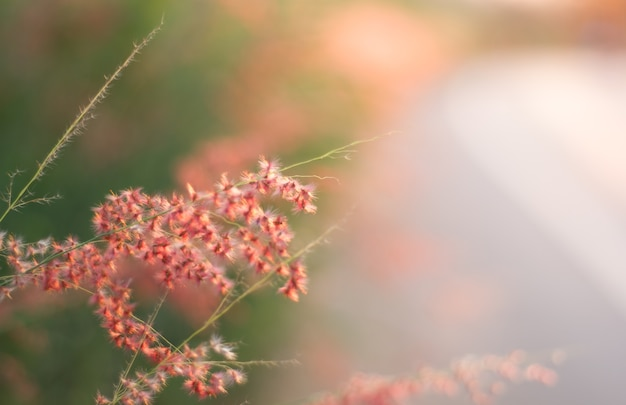 Campo de grama durante o pôr-do-sol, tom cor-de-rosa