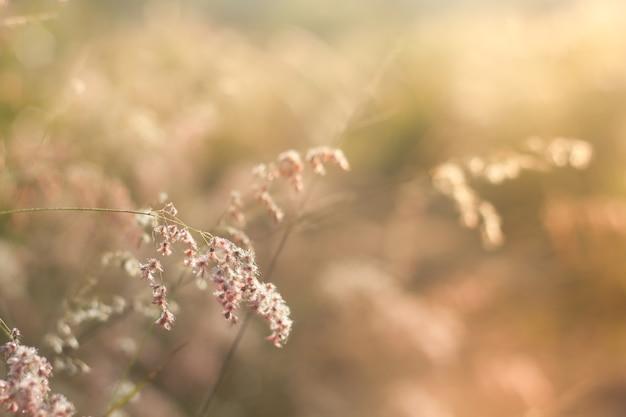 Campo de grama durante o pôr-do-sol, tom vintage.