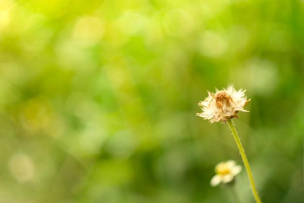 Campo de grama flor natureza fundo macio foco