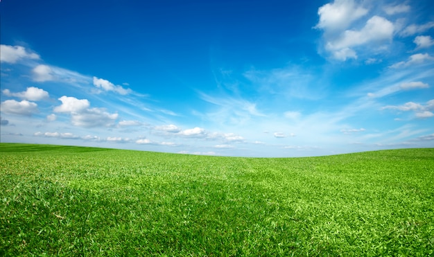 Campo de grama fresca verde sob o céu azul