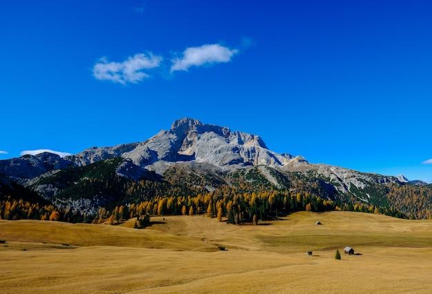 Campo de grama seca com árvores altas e uma montanha com céu azul