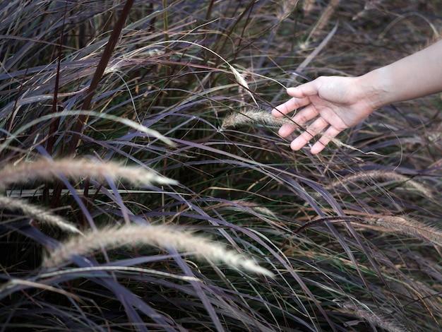 Campo de grama selvagem com mão de mulher tocando