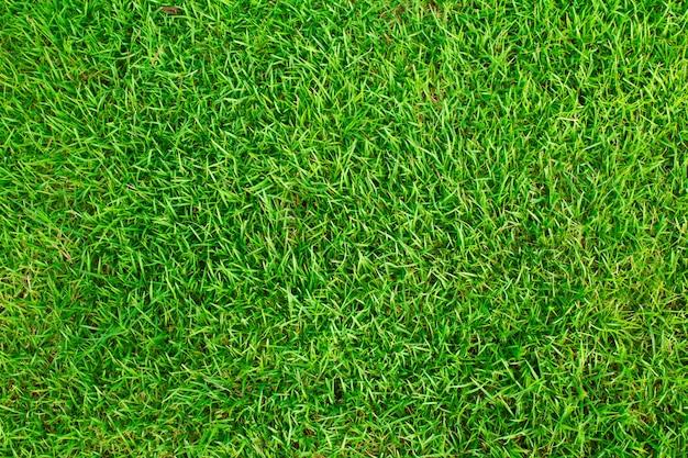 Campo de grama textura