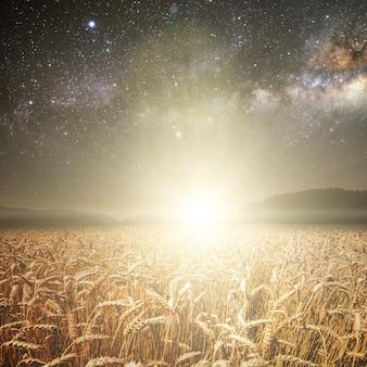 Campo de grama. trigo do prado sob o céu de estrelas. elementos desta imagem fornecidos pela nasa