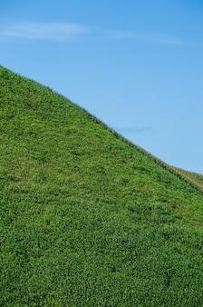 Campo de grama verde e céu azul brilhante