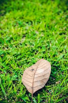Campo de grama verde e folhas secas
