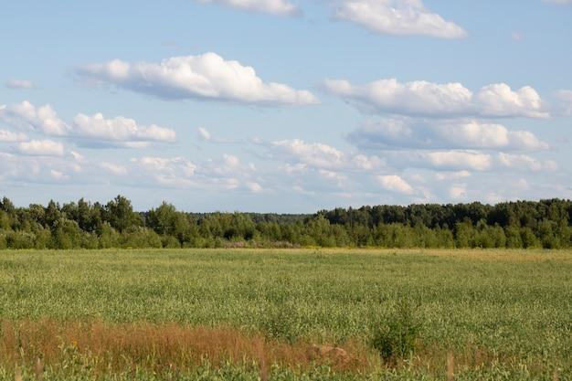 Campo de grama verde, uma floresta no horizonte e um céu azul