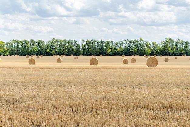 Campo de grãos colhido com fardos de palha
