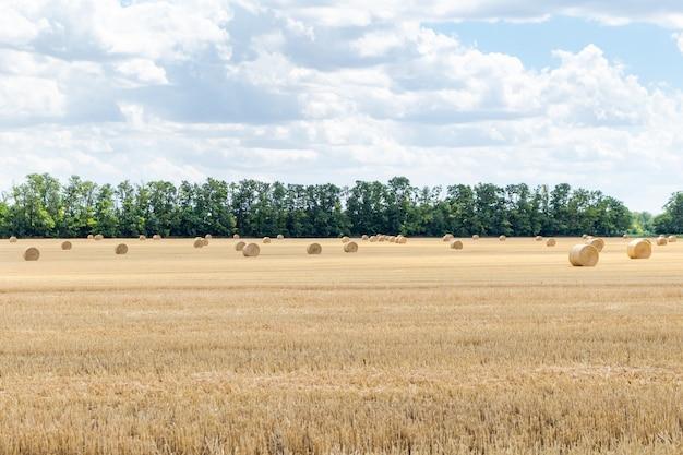 Campo de grãos colhido, com palheiros de palha, fardos, estacas