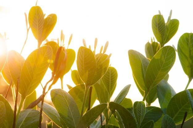 Campo de iluminação e sol no entardecer, jardim de árvore