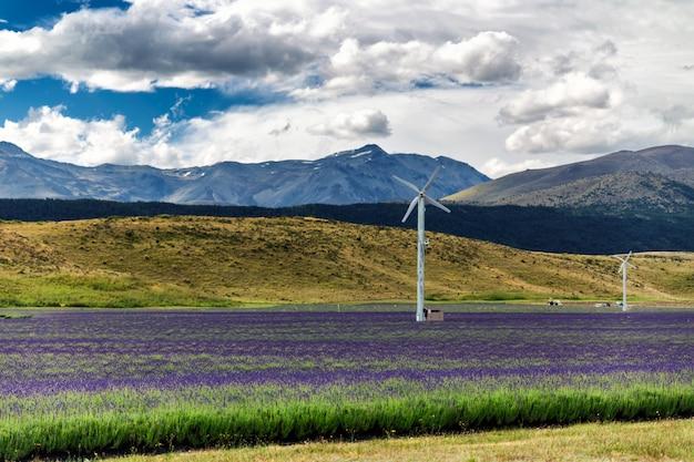Campo de lavanda em frente a belas colinas na nova zelândia