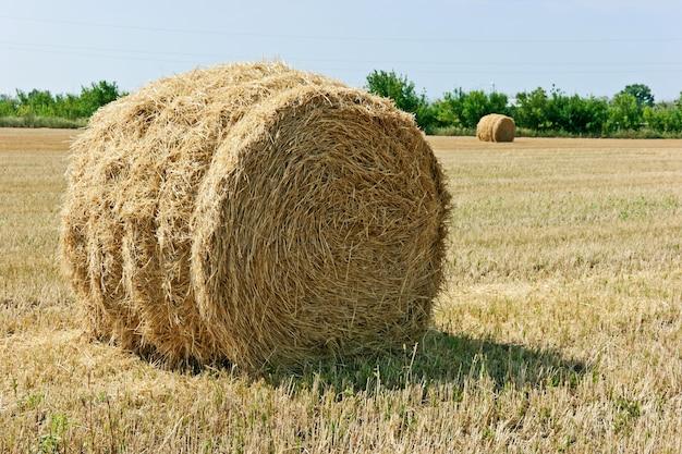 Campo de palha de trigo em declive