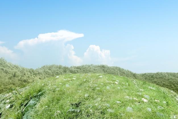 Campo de prado com céu azul