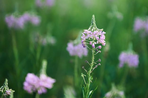 Campo de prado lindo com flores silvestres