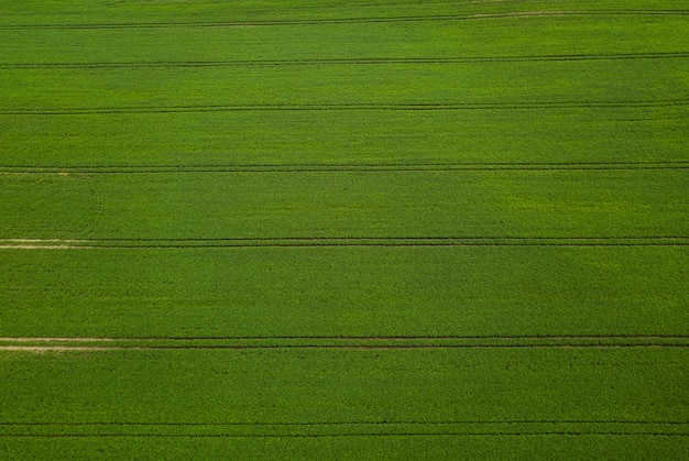 Campo de soja verde vista aérea.
