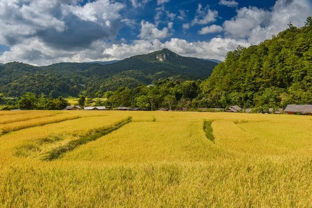 Campo de terraços de arroz dourado com vista de mouantain com céu azul e nuvens
