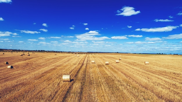Campo de trigo após a colheita com fardos de palha ao pôr do sol