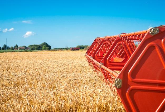 Campo de trigo de colheita combinada