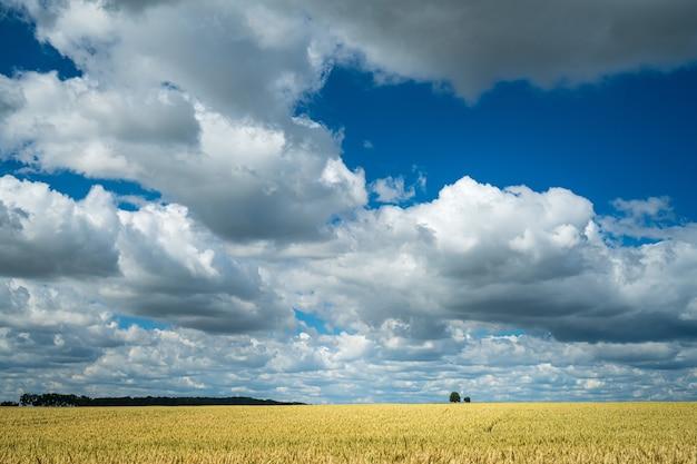 Campo de trigo em área rural sob céu nublado