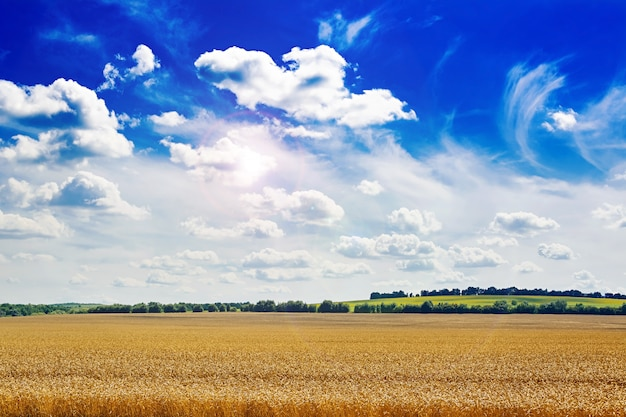 Campo de verão contra o céu azul. paisagem bonita.