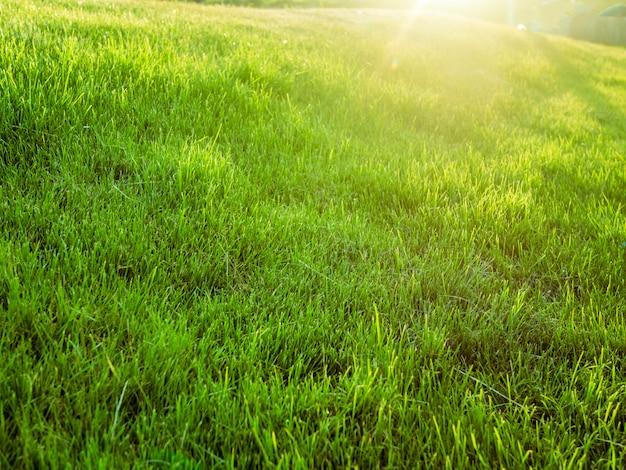 Campo de verão verde sonhador incrível com grama contra o sol