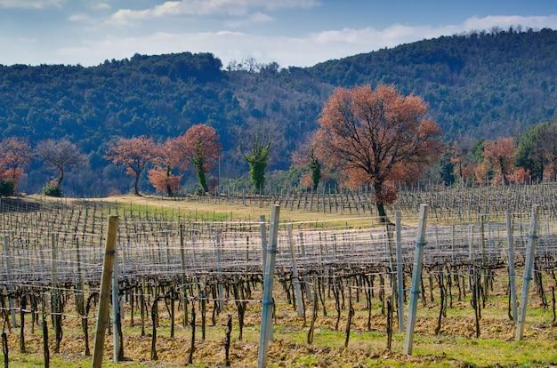 Campo de vinho vazio, árvores e montanhas contra um céu azul nublado na toscana, itália