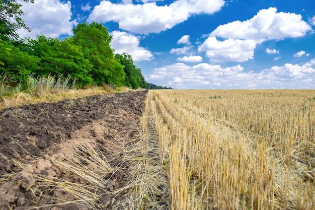 Campo dourado depois da colheita e nuvens no céu azul profundo