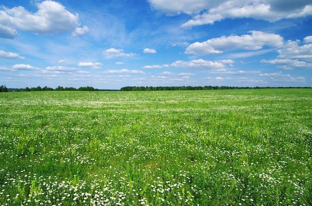 Campo e céu azul