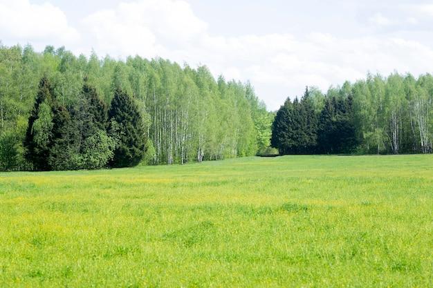 Campo e prado de verão com grama verde e flores sob o sol da orla da floresta