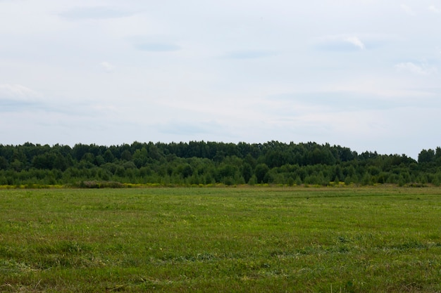 Campo em agosto, com floresta e céu azul ao fundo